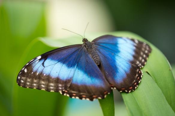 My mówimy motylek, Francuzi - papillon, Anglicy - maślana mucha, a tutaj to po prostu ... Schmetterling. Brzmi jak kolejna tajna broń ...