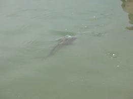 Jeziorko zamieszkują również takie potwory