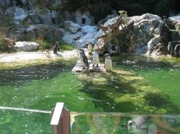 Pingwiny z Madagaskaru też rządzą ;)