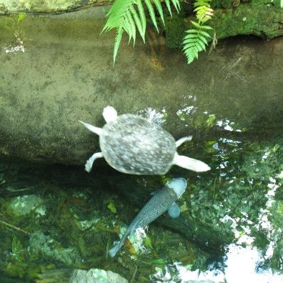 Przed tymi bandytami pomogłem uratować małego ptaszka, który wpadł do wody i nie mógł się wydostać