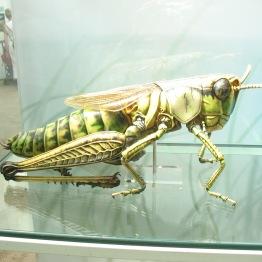 Na szczęście to tylko model, ale pawilon z owadami jest pełen interesujących okazów