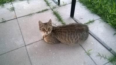 Ten kotek gdy widział naszą czwórkę razem, od razu biegł pod grilla ... odruch Pawłowa czy jak ? ;)
